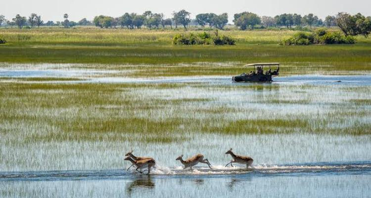 Experience The Okavango Delta In Botswana