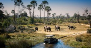 What To Do While You're On Safari In Botswana