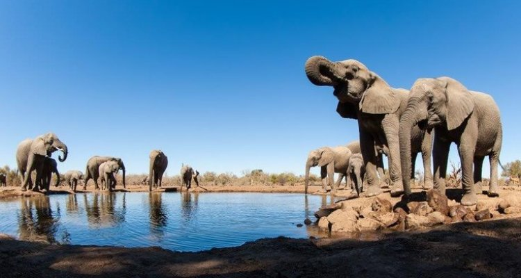 Tuli Block & Mashatu Safari in Botswana