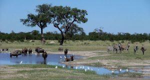 On Safari in Chobe National Park, Botswana