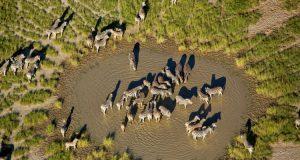 Makgadikgadi Pans Safari in Botswana