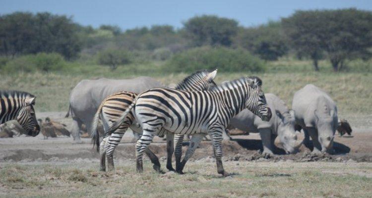 Palapye, More Than Just A Stopover On A Botswana Safari Holiday