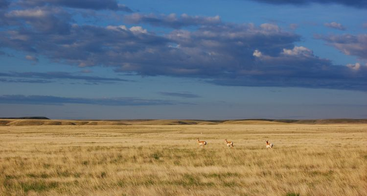 Prestigious Awards Recognise Great Plains for Their Conservation Efforts